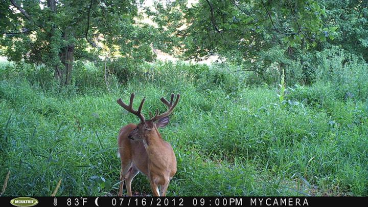 Trail Cam Review: Moultrie M-80XT Preview Image