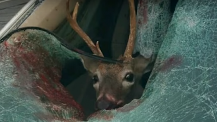 Woman Barely Escapes Injury When Deer Crashes Through Windshield Preview Image
