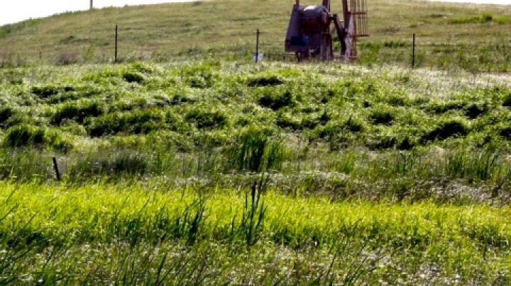 Is Oil Production in the Prairies Hurting Ducks? Preview Image