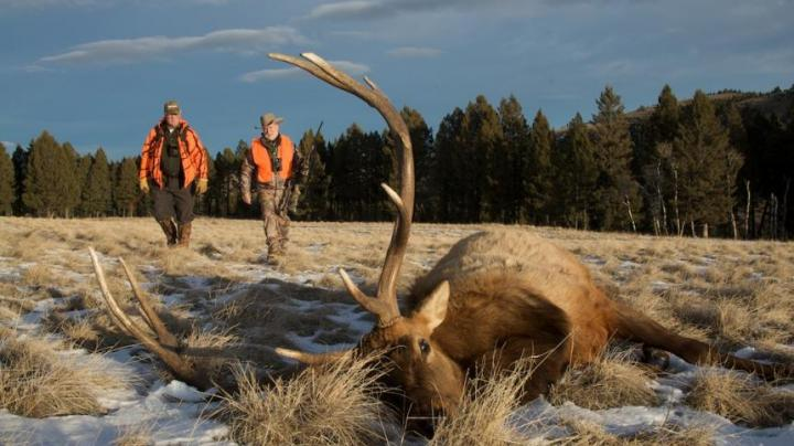 Elk Hunting in the Mountains of Montana Preview Image