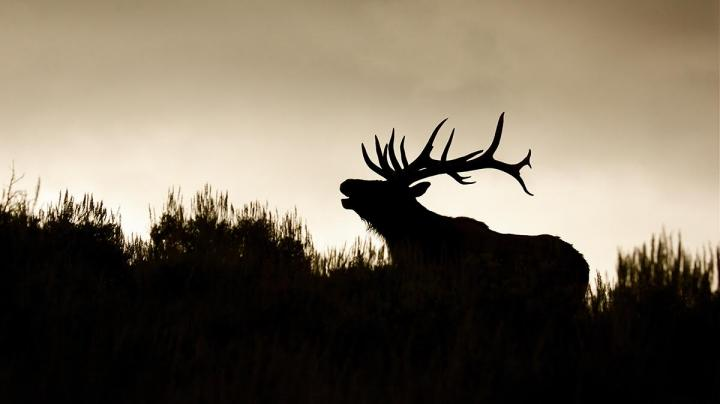 Conservation Group Urges Calm in Standoff Preview Image
