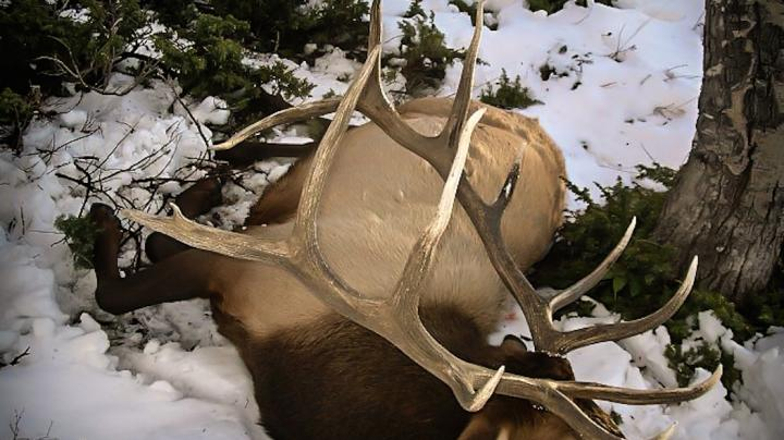 4 Big Game Bowhunts on a Budget Preview Image