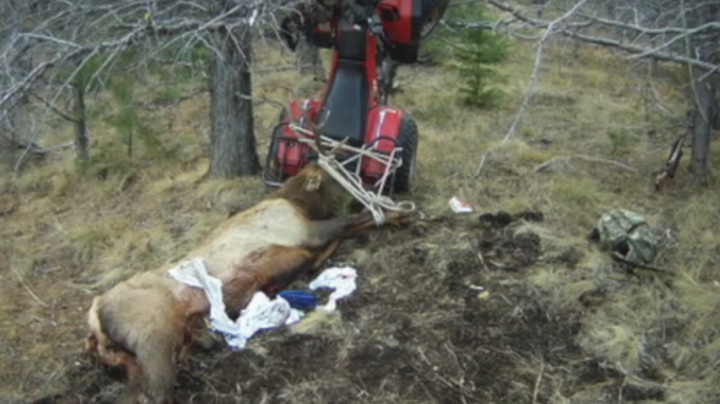 Hunter Impaled by Antlers of Elk He'd Just Killed Preview Image