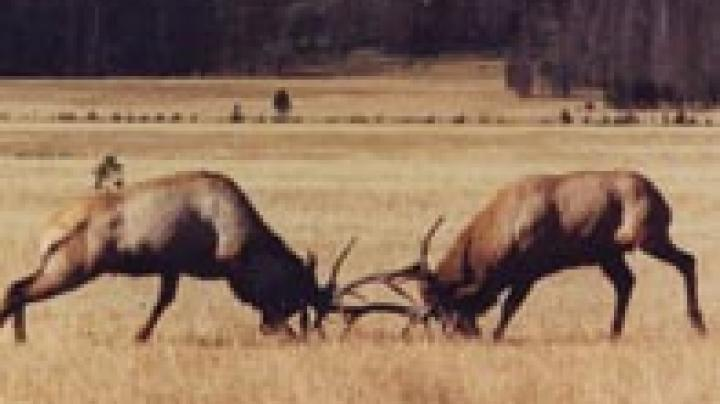 RMEF / NRA To Host Big Bull Shootoff Preview Image
