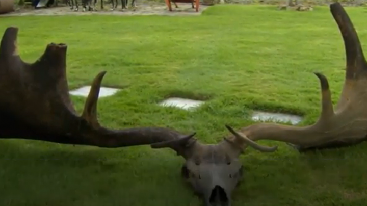 Irish Fishermen Net Massive Antlers from Extinct Elk Preview Image