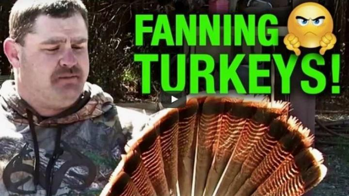 Video: Michael Pitts on Fanning Turkeys Preview Image