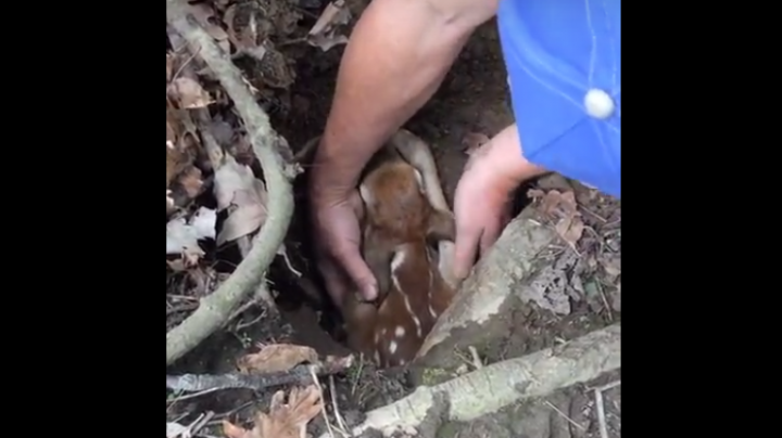 Watch Men Rescue Fawn Stuck in Groundhog Hole Preview Image