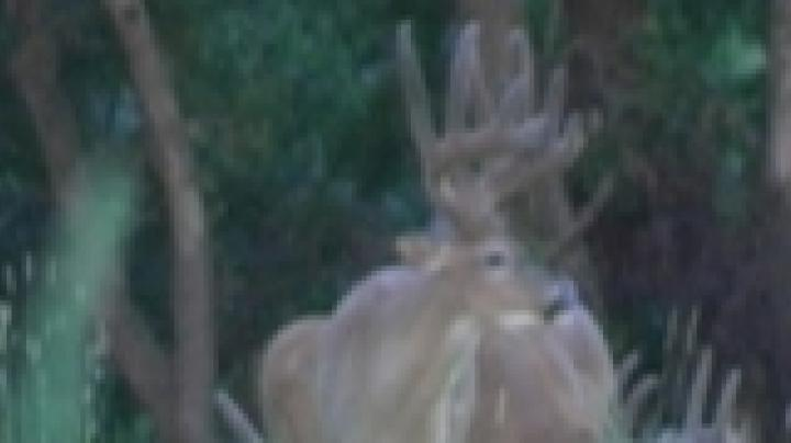 Midwest Whitetail Webisode 4 Preview Image