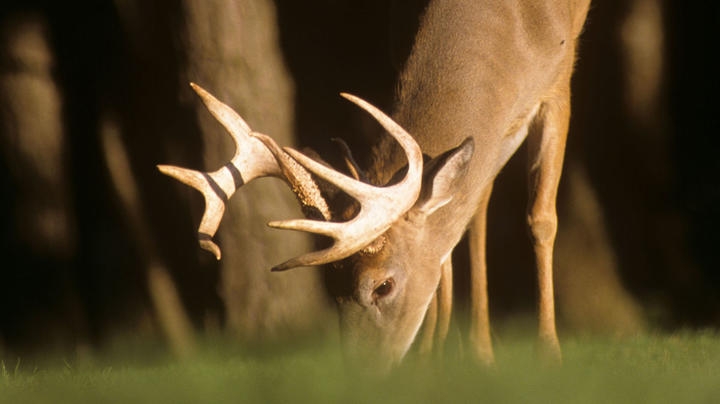 10 Reasons Why Your Food Plots Are Failing Preview Image