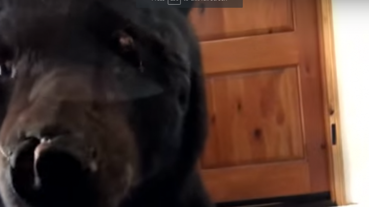 Watch Woman Try to Scare Bear Out of Her Garage Preview Image