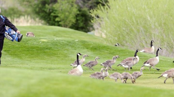Balog on Early Season Geese Preview Image