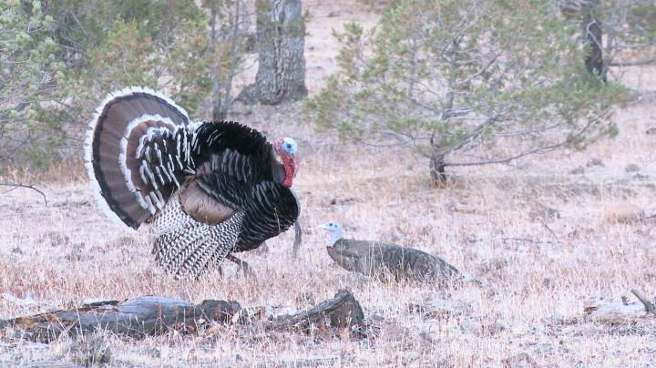 15-Yard Files: Gould's Turkey Hunting Preview Image