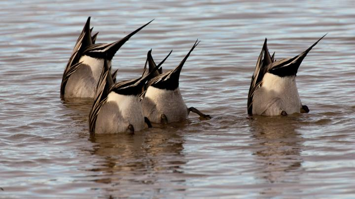 Ready for Waterfowl Season: Part 2 Preview Image