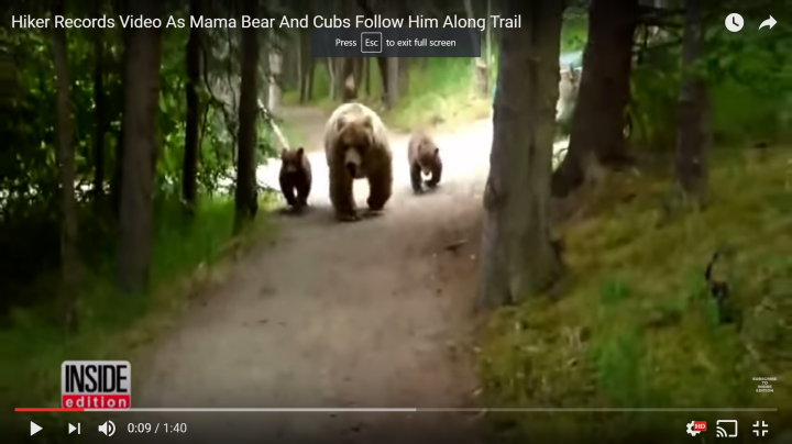 Watch as Mama Grizzly and Cubs Follow Hiker Down Trail Preview Image