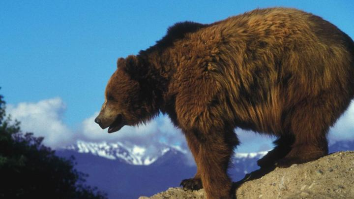 Grandma's Article Thwarts Grizzly Attack Preview Image