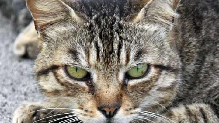 Are Feral Cats an Environmental Threat? Preview Image