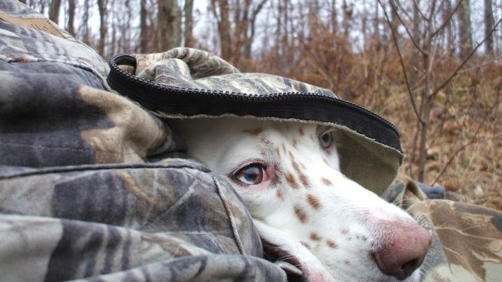 How to Hunt Fall Turkeys with Dogs Preview Image