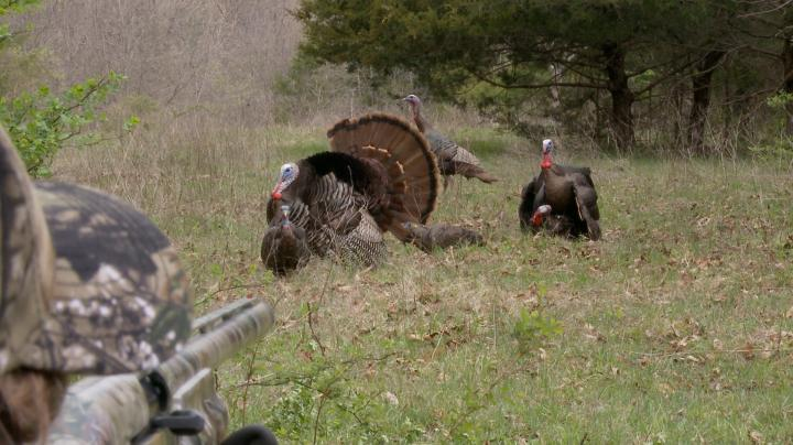 15-Yard Files: Priceless Reaction From First-Time Turkey Hunter Preview Image