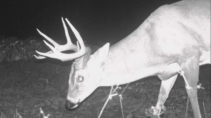 Deer Hunting QOW: What If I Only Get Nighttime Trail Cam Photos? Preview Image