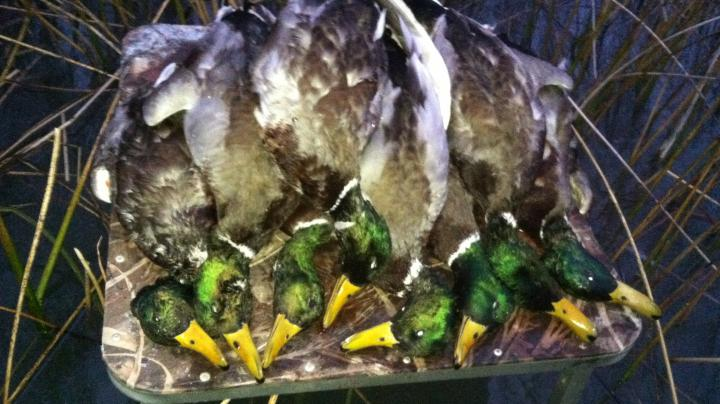 How Do Duck Hunters Measure Success? Preview Image