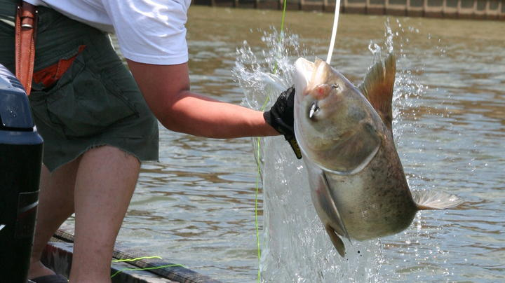 5 Tips for Bowfishing Preview Image