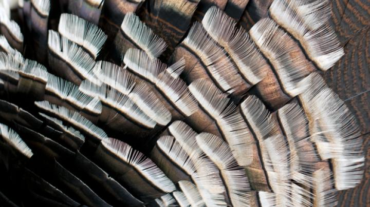 Turkey Hunting in New Mexico Preview Image