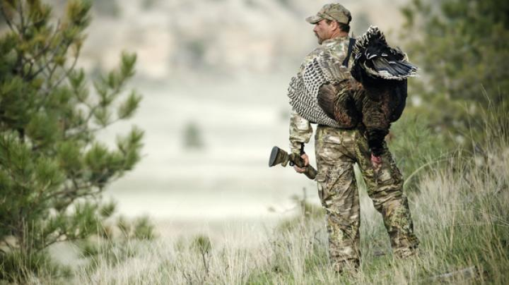 Turkey Hunting in Arizona Preview Image