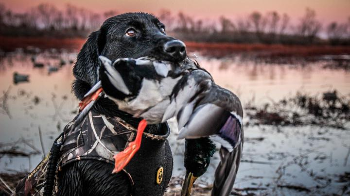 The X: Public Land Duck Hunting in Kansas Preview Image