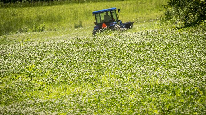 Facts about Food Plots You Should Know Preview Image