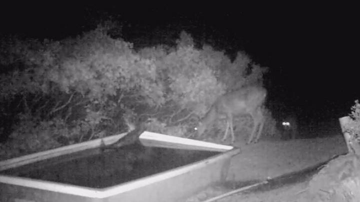 Remarkable Game Camera Footage Shows Mountain Lion Killing Deer Preview Image