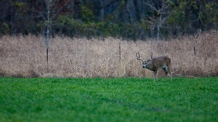 Are You Wasting Money on Food Plots?  Preview Image