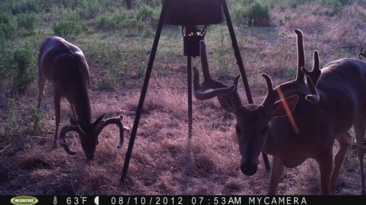 Back To Oklahoma For An October Whitetail Bowhunt Preview Image