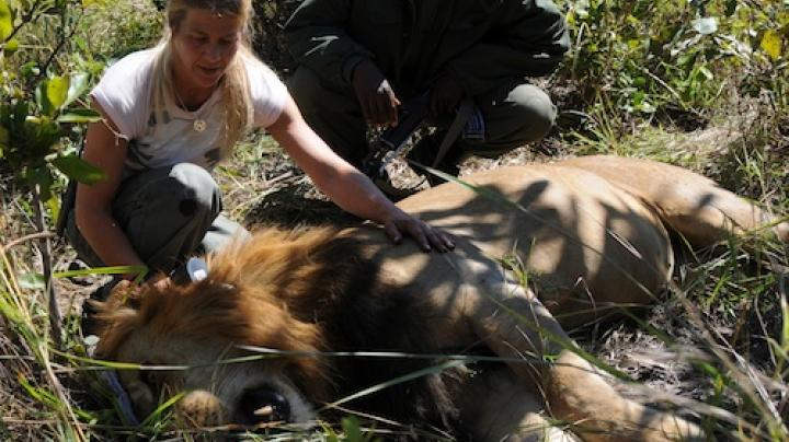 SCI Squares off with Anti-Hunting Groups over Lion Debate Preview Image