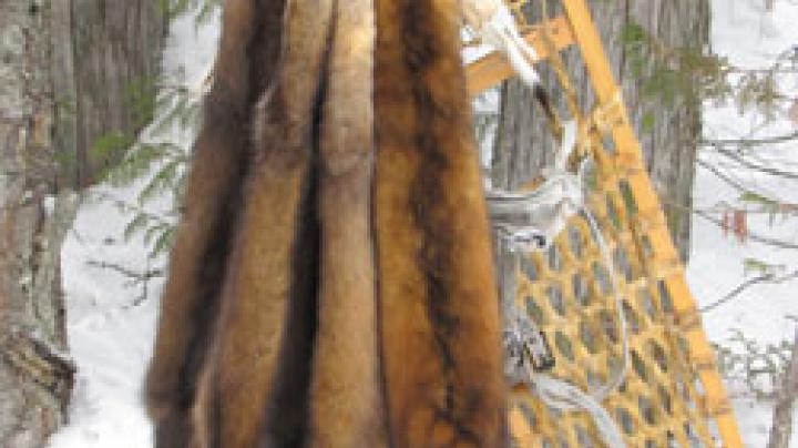 Woman Who Tried to Arrange Fur-Murder Set Free Preview Image