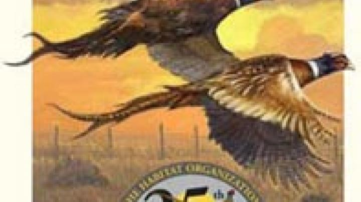 Pheasants Forever Turns 15! Preview Image