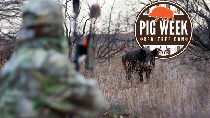 The Hog Hunting Quiz Preview Image