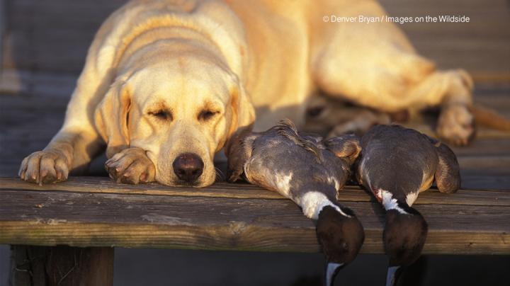 Cold Weather Brings New Ducks to Southern Mississippi Flyway Preview Image