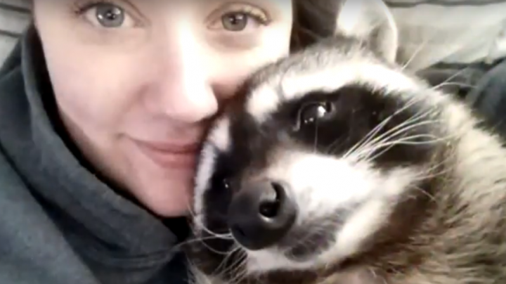 Couple Sues Department of Wildlife and Fisheries to Get Back Their Pet Raccoon Preview Image