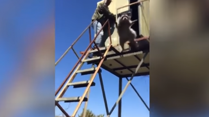 Watch Hilarious Video of Raccoon Leaping Out of Shooting House  Preview Image