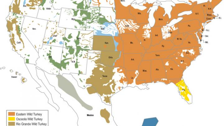 Wild Turkey Subspecies Map Preview Image