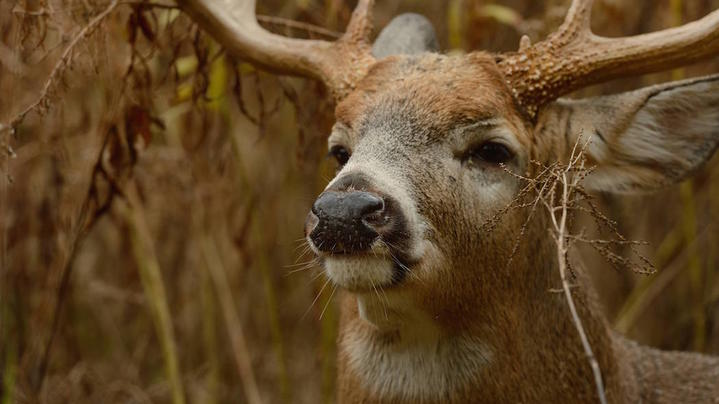 Things to Know About a Deer's Sense of Smell Preview Image