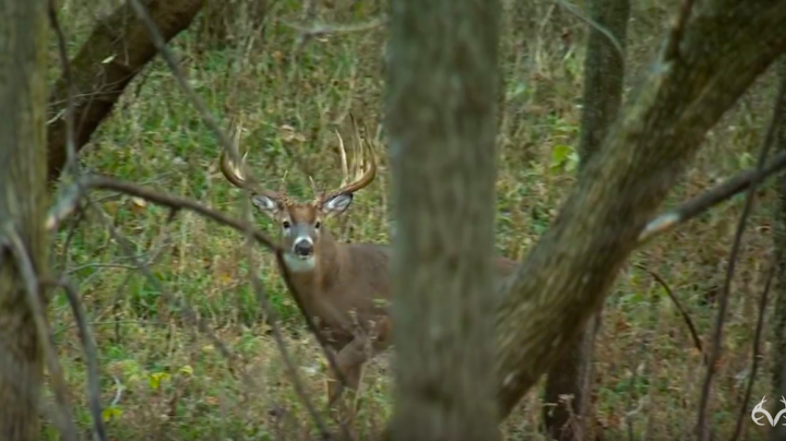 An Inside Look at a Huge Typical Whitetail Preview Image