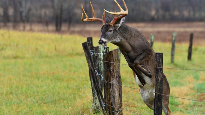 5 Great Spots for All-Day Whitetail Rut Hunts Preview Image