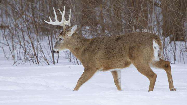 What to Know About Quality Deer Management Preview Image