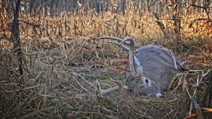 5 Factors for Rut Hunting Success Preview Image