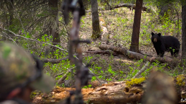 Bowhunting Alberta Black Bears from the Ground Preview Image