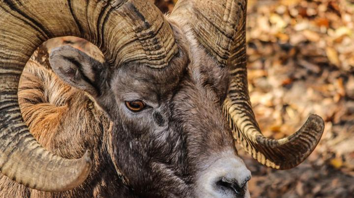 10 Most Difficult North American Big Game Hunts Preview Image