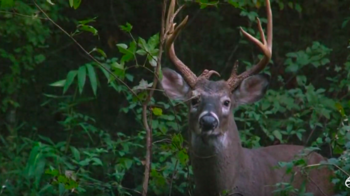 Deer Hunter Takes Giant Southern Buck with a Bow Preview Image