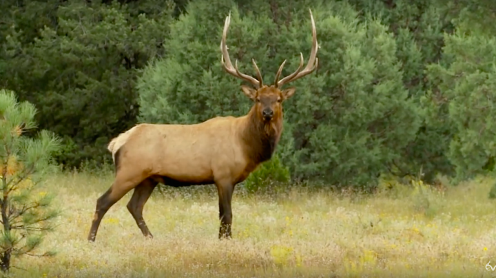Bill Jordan Hunts Big New Mexico Bull Elk Preview Image