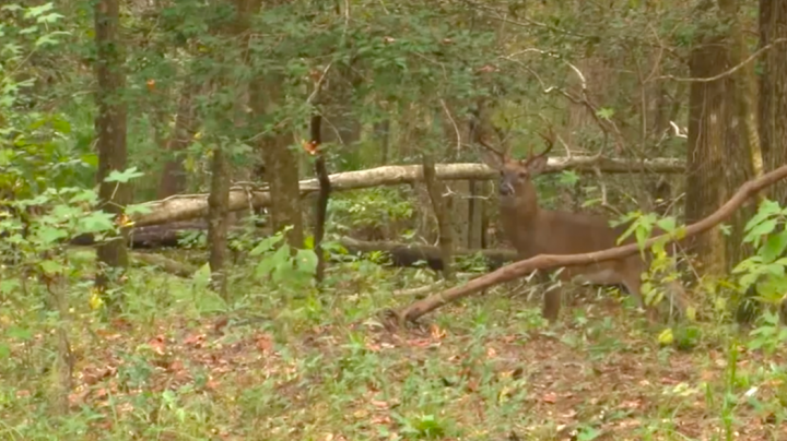 Slow Motion Playback of Bowhunter Missing Big Buck Preview Image